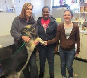 """Sycamore Lane Middle School students job shadowed on Friday, March 14, 2014 to learn more about the Humane Society, including saying, """"Happy Tails"""" to this Shepherd girl! — with Allyson Ward and Deborah Pandis at Scotland County Humane Society."""